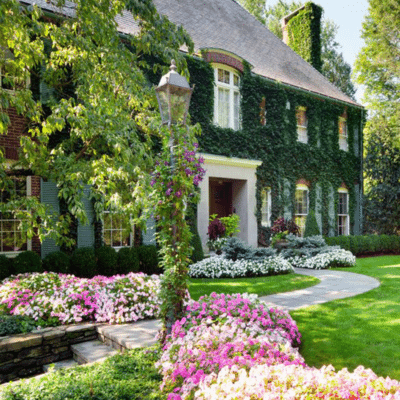 The Truth Behind Ivy-Covered Houses