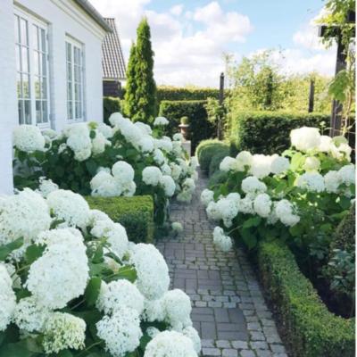 A Heavenly Garden in Denmark